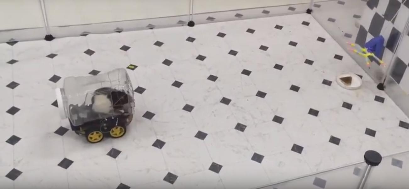 rat drives tiny car (screenshot)