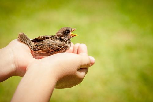 Hands releasing bird to wild