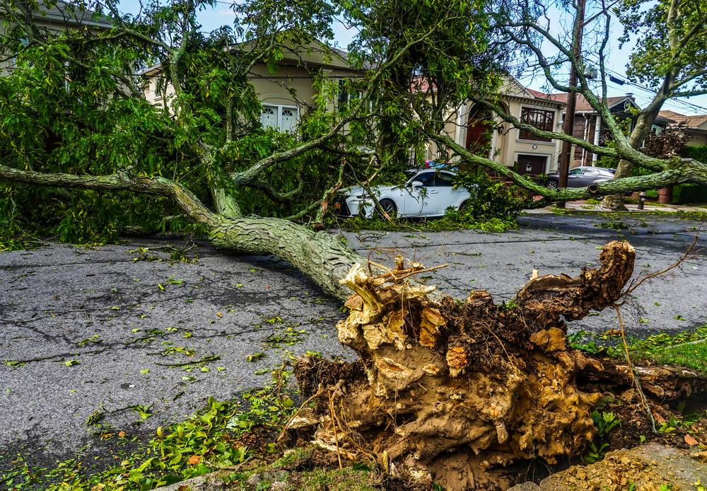 Isaia storm damage