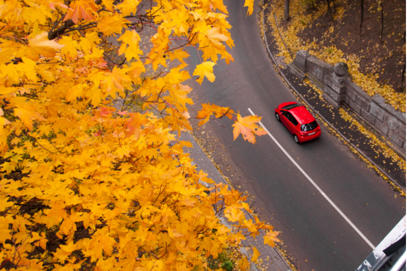 aerial view of red car on autumn road