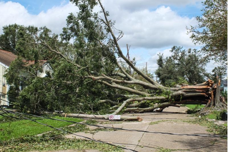 downed tree hurricane ida jefferson louisiana